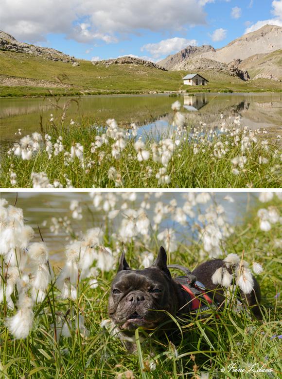 Lago en Col de la Bonette y Max disfrutando de la naturaleza