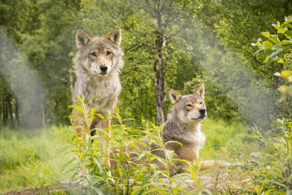 Lobos del Polar Park