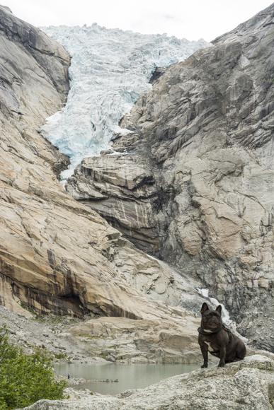 Max en el Glaciar Briksdalsbreen