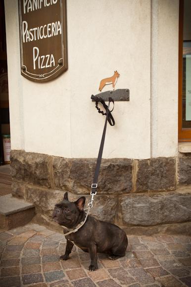 Curioso artilugio para dejar al perro atado