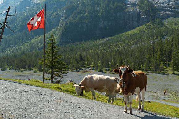 Estampa suiza en el lago Oeschinesee