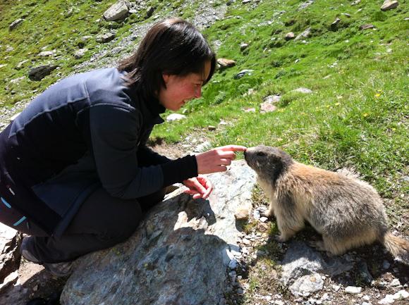 Acariciando a las marmotas
