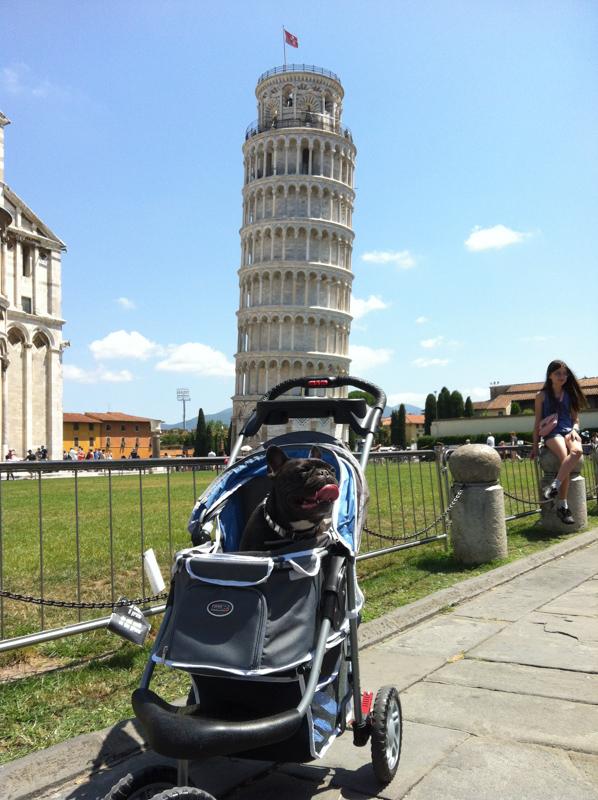 Max con el cochecito para perros en Pisa